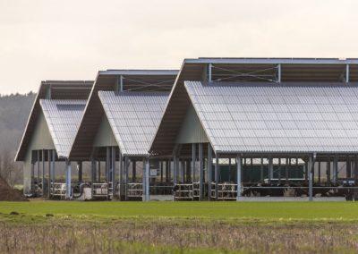 Pig shed landscape